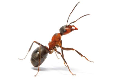 Bluegroep Pestcontrol mieren